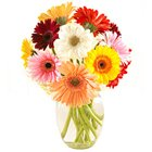 Gorgeous Twelve Assorted Gerberas Kept in Vase