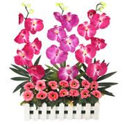 Long Lasting � Orchids Garden