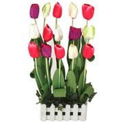 Long Lasting � Tulips Garden