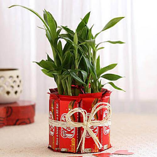 Delightful Kitkat Arrangement with 2 Tier Lucky Bamboo Plant