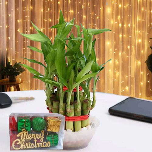 Beautiful 2 Tier Lucky Bamboo N LED Light Combo