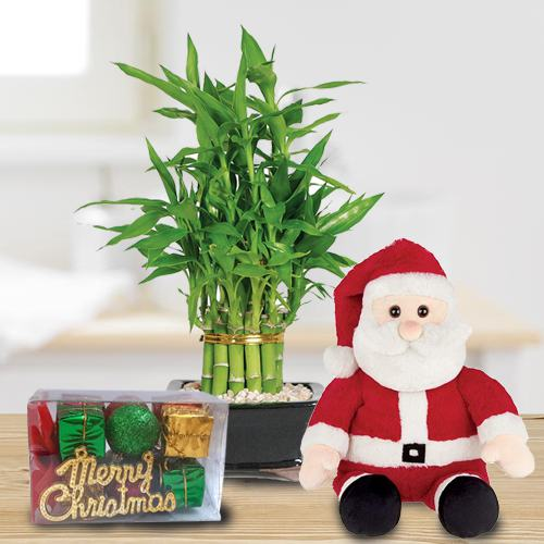 Special Gift of 2 Tier Bamboo with Santa Teddy