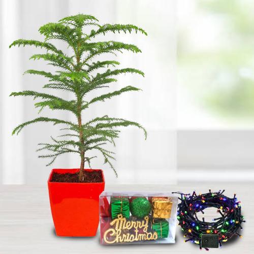 Exclusive Plants Gift Combo