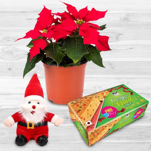 Alluring Plants Gift Combo for X-mas
