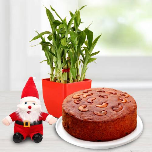 Wonderful Lucky Bamboo Plant with Plum Cake n Santa Claus Cap