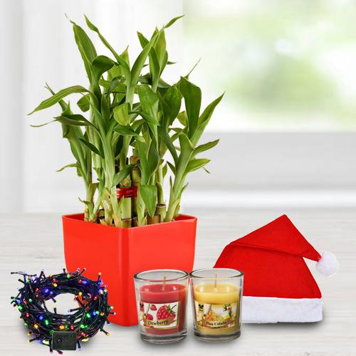 Exquisite Plant Gift Combo