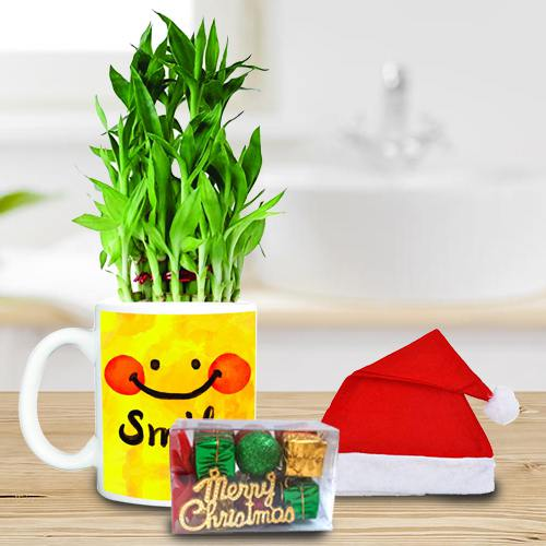 Marvelous Plants Gift Hamper