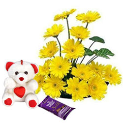 Hand-Arranged Yellow Gerberas with Teddy N Dairy Milk Silk