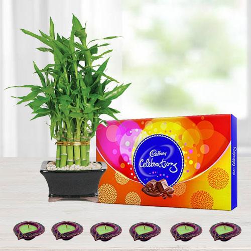 Cadbury Chocolates with Lucky Bamboo Tree n Diya