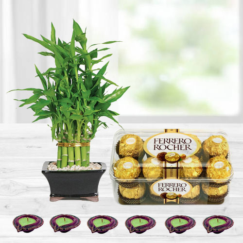 Diwali Gift of Lucky Bamboo Plant with Chocolates
