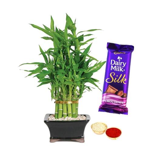 Cadbury Silk N 2 Tier Bamboo Plant