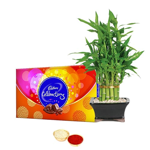 Celebrations Pack N 2 Tier Bamboo Plant