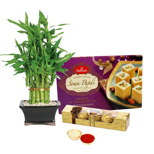 Soan Papdi with Bamboo Plant N Ferrero Rocher Chocolates