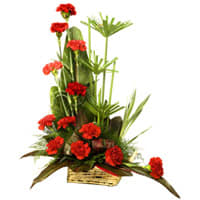 Cherished Bouquet of One Dozen Gorgeous Carnations