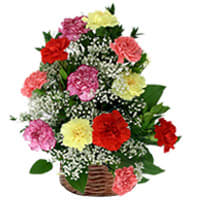 Graceful Arrangement of 15 Mixed Carnations in a Basket