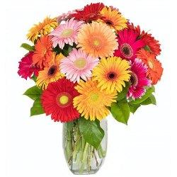 Beautiful arrangements of Gerberas in a big Vase