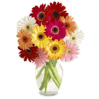 Delicate Fresh Mixed 15 Gerberas Arrangement with Vase