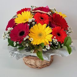 Attractive mixed Gerberas