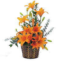 Amazing Orange Lilies Basket Arrangement