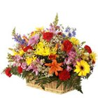 Sweetest Mix Arrangement of Fresh Flowers with Warm Wishes