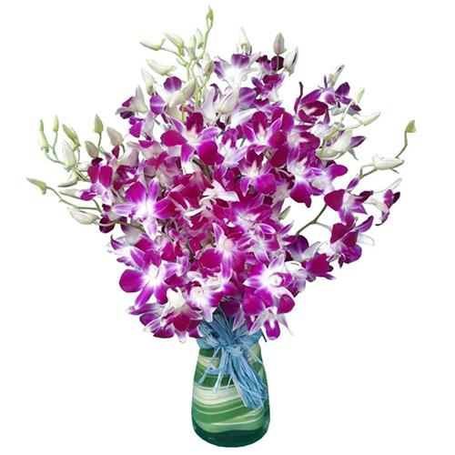 Lovely Orchids in Vase