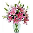 Soft Pink Lilies in a Vase