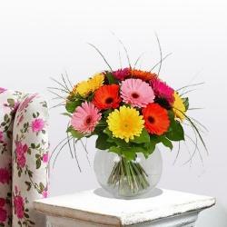 Stunning Gerberas in Vase