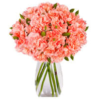 Elegant Vase Filled with 12 Pink Carnation