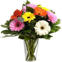 Multicoloured Gerberas in a Glass Vase