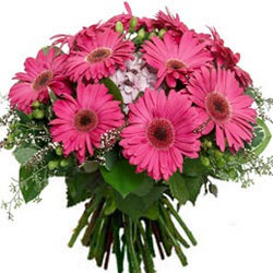 Resplendence Bunch of Pink Gerberas