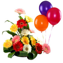 Graceful and Gorgeous Mixed Gerberas with Balloons