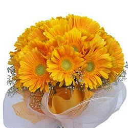 Cherished Gerberas Bunch of Yellow Colour