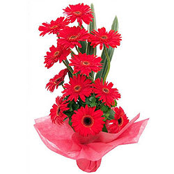 Awesome Red Gerberas Arrangement
