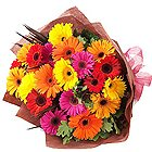 Fashionable Bunch of Mixed Gerberas