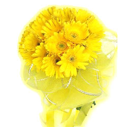 Silky-Smooth Bunch of Yellow Coloured Gerberas