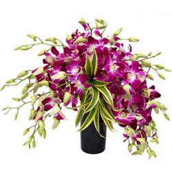 Gorgeous 12 Orchids Display in a Glass Vase