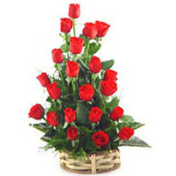 Enchanted Collection of Red Roses<br>