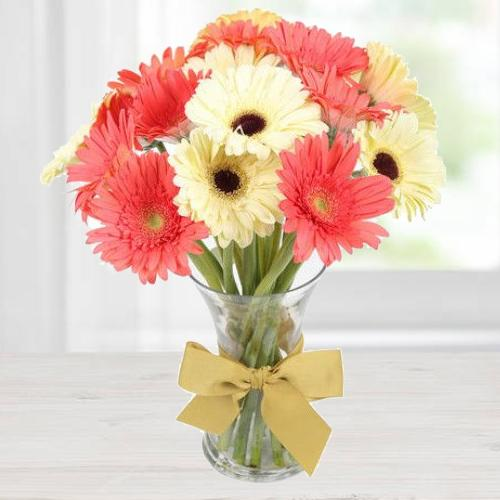 Enthralling Flourish Gerbera Collection