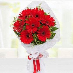 Angelic Vibrancy Red Gerberas Bouquet