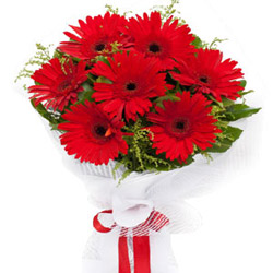 Exuberant Grace Red Gerberas Bouquet