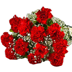 Buy a premium Bouquet of Red Carnations