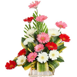 Spectacular Table Top Arrangement of Mixed Gerberas