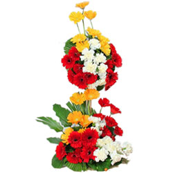 Gorgeous Long Stem Arrangement of Mixed Gerberas