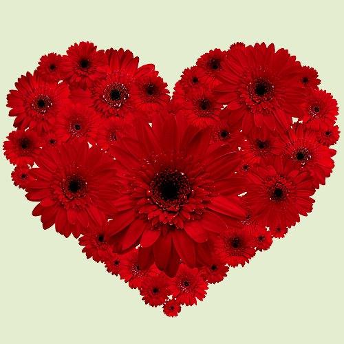 Impressive Red Gerberas Heart Shape Arrangement