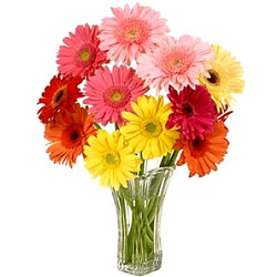 Artistic Glass Vase Display of Mixed Gerberas