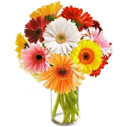 Graceful display of Multi-colored Gerberas in Glass Vase
