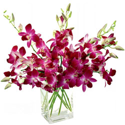 Cheerful Glass Vase Presentation of Orchids