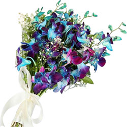 Cheerful Bunch of Blue Color Orchids