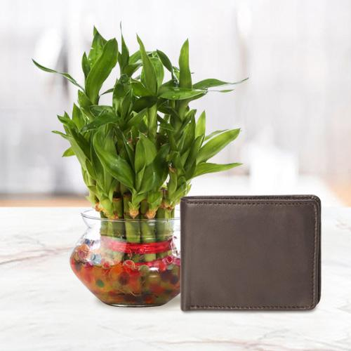 Elegant Mens Brown Leather Wallet from Rich Born with a 2 Tier Lucky Bamboo Plant for Good Luck