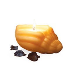 Astonishing IRIS Sea Shell Aroma Candle Set